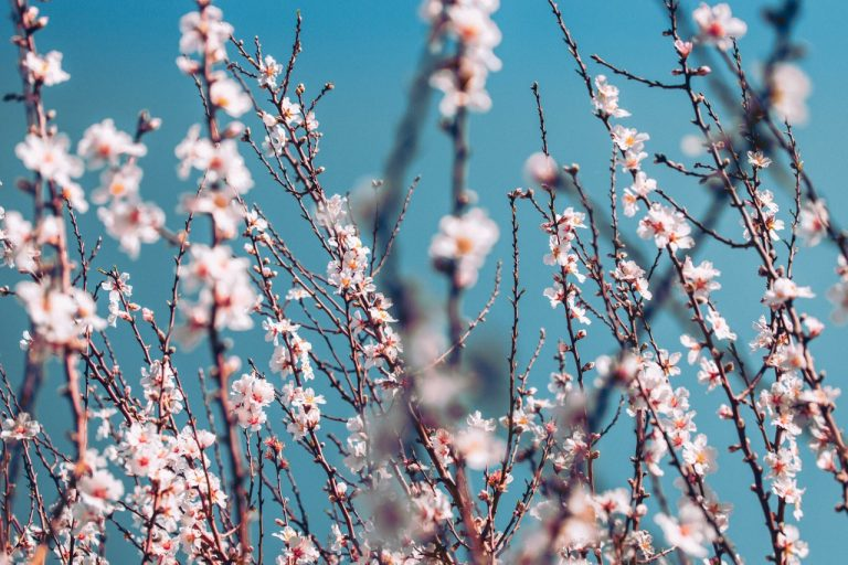 decorative image of some branches with cherry blossoms in front of a blue sky. for mood boosting reasons